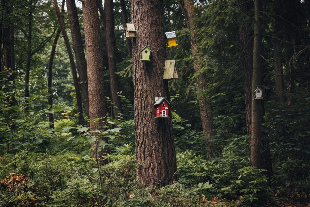 Five variously colored birdhouses nailed into a tree in a large, green forest.