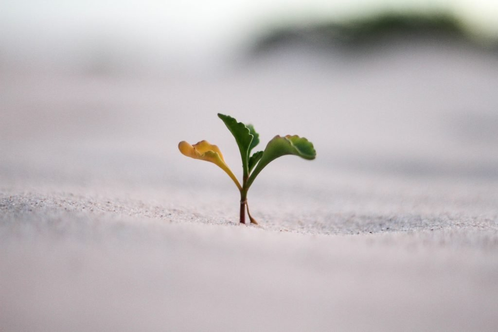 A small plant sprouting in dirt.