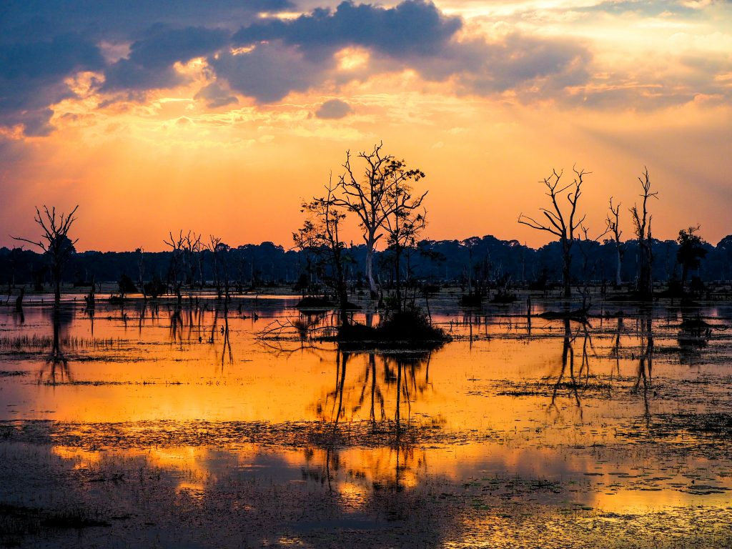 A swamp reflecting the sunset.