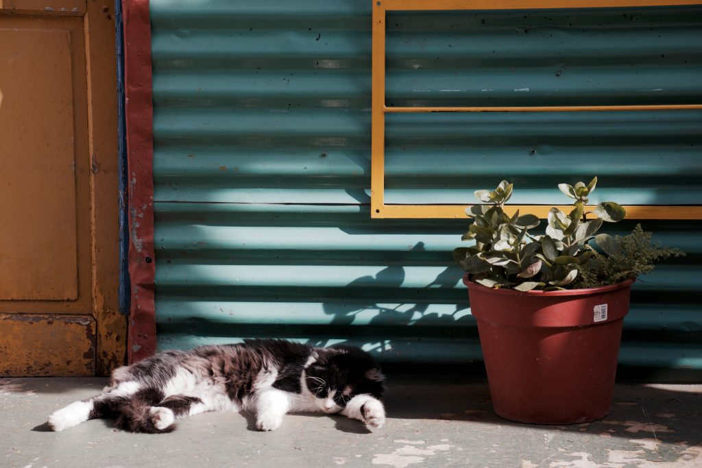 A cat lazily sitting on a porch.