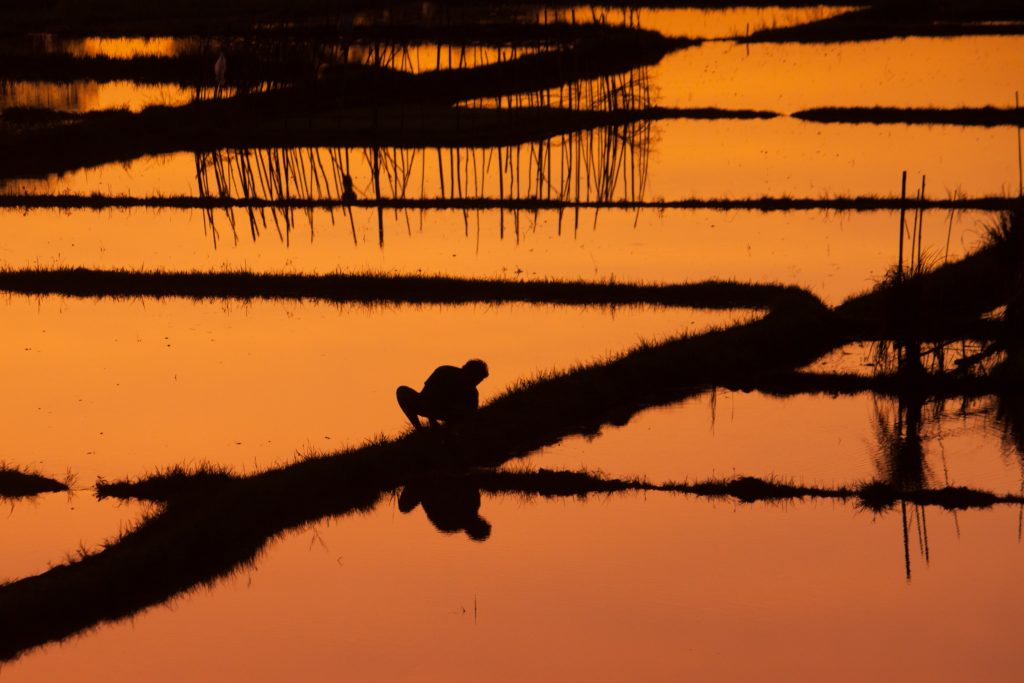 A farmer growing crops in the water.