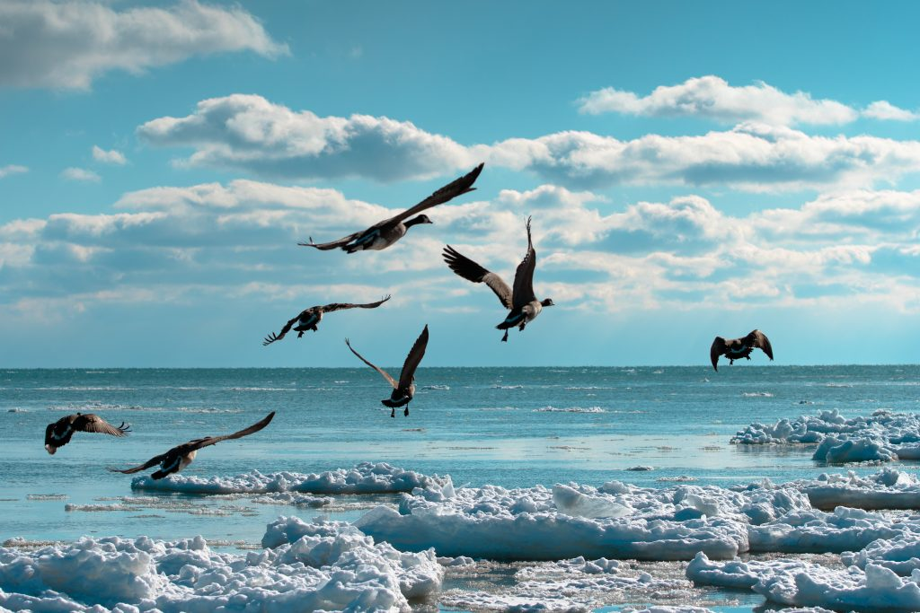 Birds flying at the beach.