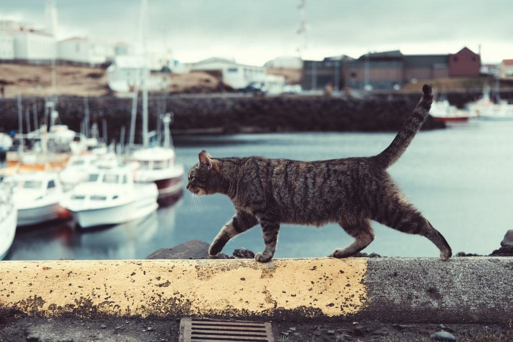 A cat walking past some boats.